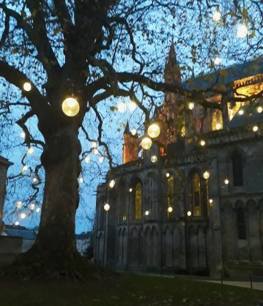 arbre de la liberte bayeux normandie