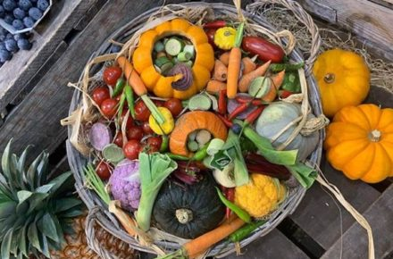 ana distri legumes de saison