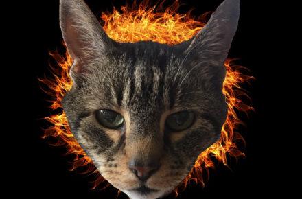chat maléfique