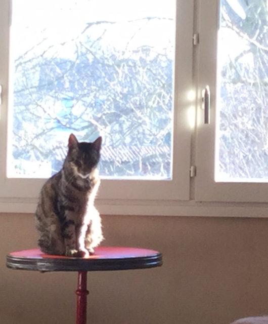 equilibre et instinct chat