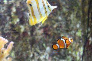 aquarium de la Cité de la Mer à Cherbourg