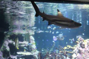 L'aquarium abyssal de la Cité de la Mer